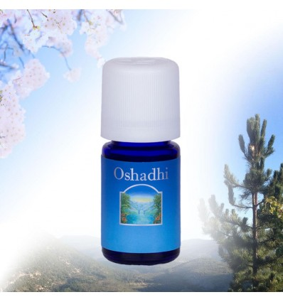 Olio essenziale di Salvia Bio 5 ml