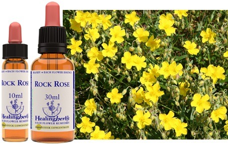 FIORI DI BACH: ROCK ROSE